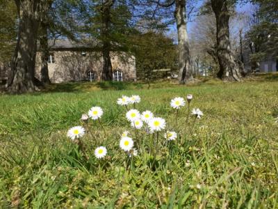 fleurs la providence